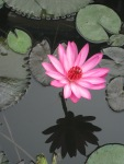 Conscience_Central Park_Gurgaon_NS Rajan